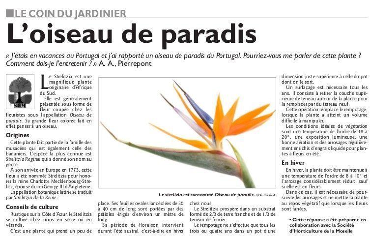 Societe d 39 horticulture de la moselle page 20 for L oiseau jardinier